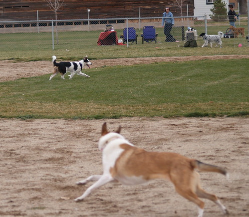 Running After Flyball