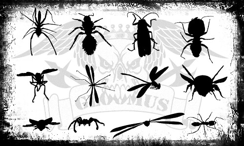 insectsilhouettes por ti.