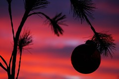 """My Charlie Brown """"Pitiful"""" Christmas Tree at Sunset (Crumblin Down) Tags: county christmas xmas blue winter sunset red sky orange sun moon color reflection tree silhouette yellow set bulb clouds fire photography photo pond colorful jasper bright stripes brian indiana peanuts reflect ornament land charliebrown lunar brilliant dubois bruner"""