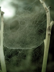 spider web net