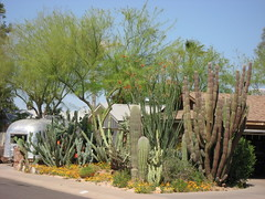Native garden (Plant Design Online) Tags: urban color gardens cacti xeriscape shape sustainability biodiversity bodyplan morphology natives strategies