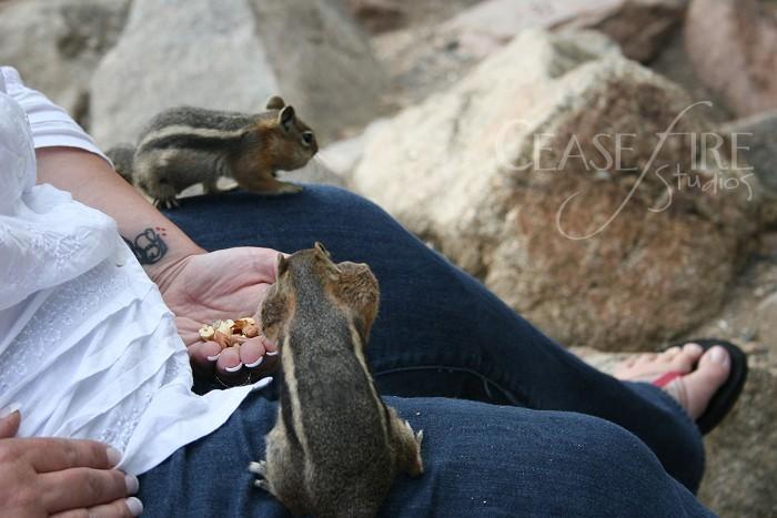 07-12-squirrels4