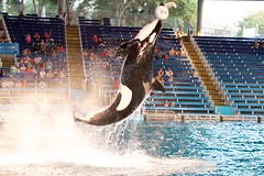 Huge jump (Isidro Urena .) Tags: travel summer canon san texas top visit adventure 7d orca antonio seaworld