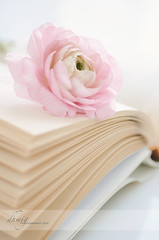 There is more treasure in books than in all the pirate's loot on Treasure Island (Walt Disney) (dhmig) Tags: pink stilllife flower closeup book nikon dof buttercup pages naturallight 50mmf28 nikond7000 dhmig dhmigphotography
