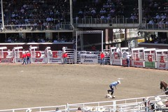 Calgary Stampede Rodeo - Tie Down Roping