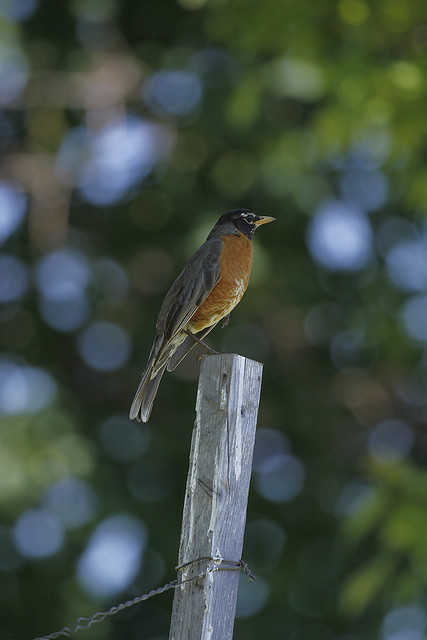 robin on post2