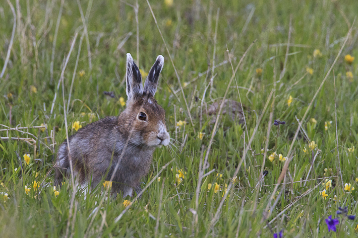 061111_rabbit01