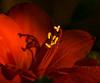 Shadow Playing (edwardleger) Tags: light red flower nature louisiana shadows 2008 betterthangood theperfectphotographer edwardleger exquisiteimage qualitypixels edwardnleger