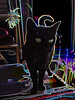 salome (flora.cyclam) Tags: black cat salome pse2