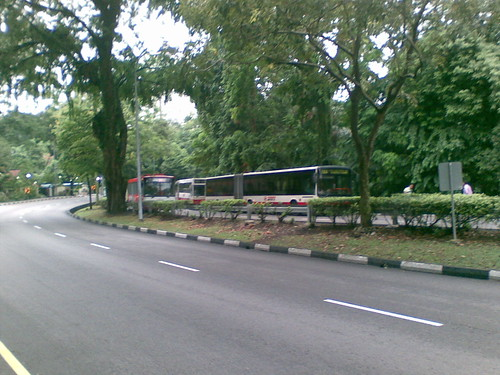Queue of stopped buses along Stevens Rd