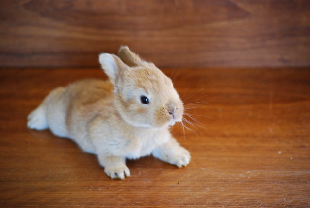 Cute sandy bunny