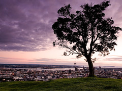 The Trees View (Mark Emirali) Tags: city light newzealand tree art nature clouds sunrise landscape view auckland nz aotearoa 30d mteden copyrighted canon30d pleasedonotusewithoutmypermission maloe4 lphometown maloephoto maloephotography markemirali markemiraliphotography