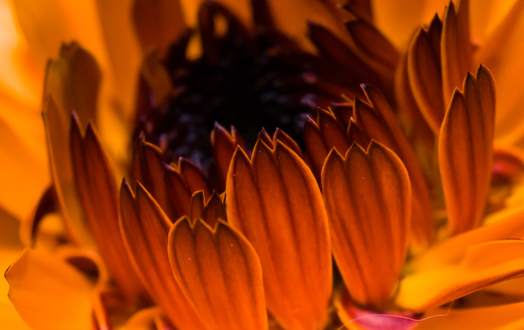 marigold_7560
