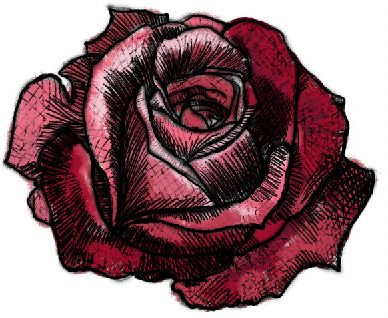 black and white rose drawing. Black and white drawings,