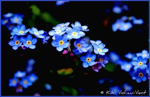 A sea of blue eyes