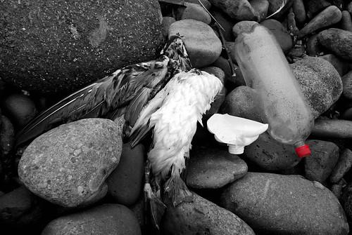 Contaminación, Punta Lobos, Lima-Perú, 2008