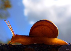 Lento..., pero firme y seguro (Jabi Artaraz) Tags: naturaleza nature beautiful animal fauna amazing spain bravo europa europe gorgeous sony natur natura bilbao chapeau 500views lovely 1001nights bizkaia soe magicmoments vizcaya bilbo basquecountry caracol 1000views smrgsbord animaliak pasvasco beautifulearth blueribbonwinner barraskiloa supershot 100faves 1000vistas fineartphotos fantasticnature flickrcolour abigfave platinumphoto superaplus aplusphoto flickrbest impressedbeauy favemegroup4 diamondclassphotographer flickrdiamond estremit theunforgettablepictures excapture proudshopper theperfectphotographer 20tfanimales goldstaraward jartaraz flickrestrellas rubyphotographer salveanatureza llovemypics alfa350 magicdonkeysbest flickrfloresemacros naturallymagnificent bestflickrphotography goldenvisions lesamisdupetitprince bderechosdeautorauthorscopyrightbjabiartaraz bestofblinkwinners blinksuperstars