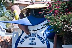 Local (Cabo) Dive (il_drive) Tags: cruise carnival mexico nikon elation soe cabosanlucas d80 bej betterthangood theperfectphotographer