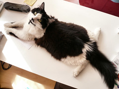 Stretched cat (fatseth) Tags: broken cat pose crazy funny chat legs awesome gato pause stretched parallel stretching splits morel drole cass jambe amusant lolcat ecart fatseth tir genseric