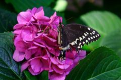Bella Mariposa y Flor (rcanas) Tags: camera flowers flores nature beautiful club digital butterfly mariposa watcher digitalcameraclub supershot auniverseofflowers