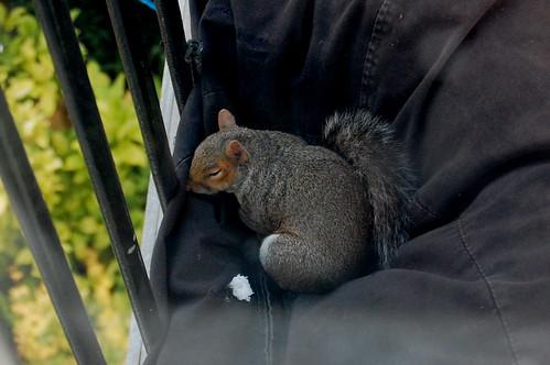 Squirrel in Beanbag