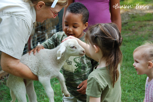 Shepherd Day Camp ::: Baby Lambs