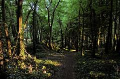 Leafy Scene (Ed Guiry) Tags: ireland nikon youghal realireland rostellan nikond80 nikon1735f28 edguiry hedirey nikond700 canong9 nikond300 youghalphotographer