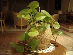 jar of life (Moe.Mousavi) Tags: life green jar thebestofday gnneniyisi