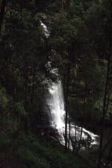 Oz3 252 (Gillian in Brussels) Tags: nature coast waterfall nationalpark australia shore greatoceanroad erskinefalls greatotwaynationalpark