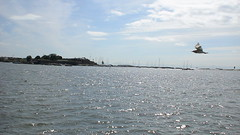 DSC02346 (t.ume) Tags: finland helsinki seagull gull