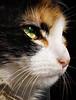 Ojos de gato (Errlucho) Tags: