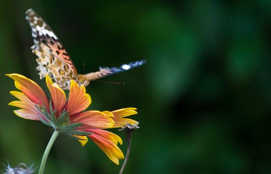 butterfly_9629