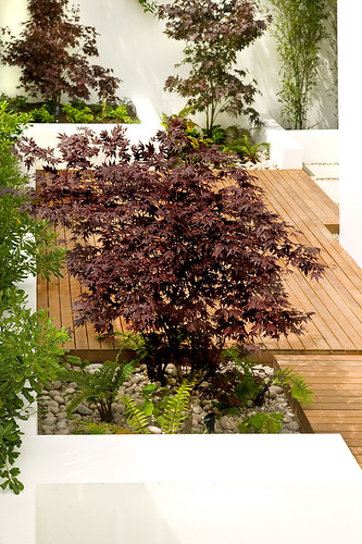 Cool Contemporary Garden