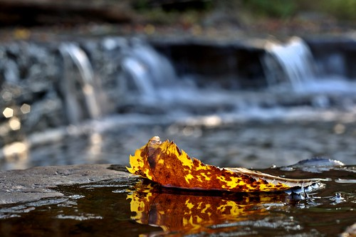 NiftyFifty: Foliage (by john_brainard)