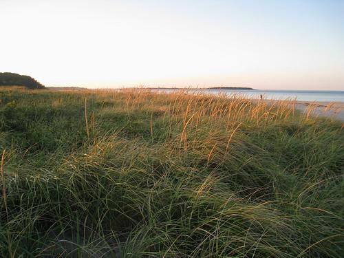 Grass field at Crane's Beach