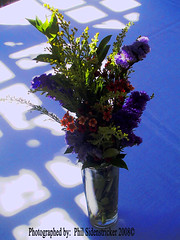 Fresh Flowers (phil_sidenstricker) Tags: flowers table vase tablecloth lightshadow donotcopy valleyofthesunphoenixmetro upcoming:event=981998 southmountainfarmphoenixazusa