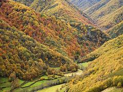 Muniellos (elosoenpersona) Tags: wood autumn mountain rio forest de asturias bosque otoño montaña asturies desfiladero cangas narcea hayedo muniellos robledal moal platinumphoto anawesomeshot aplusphoto tablizas elosoenpersona vosplusbellesphotos