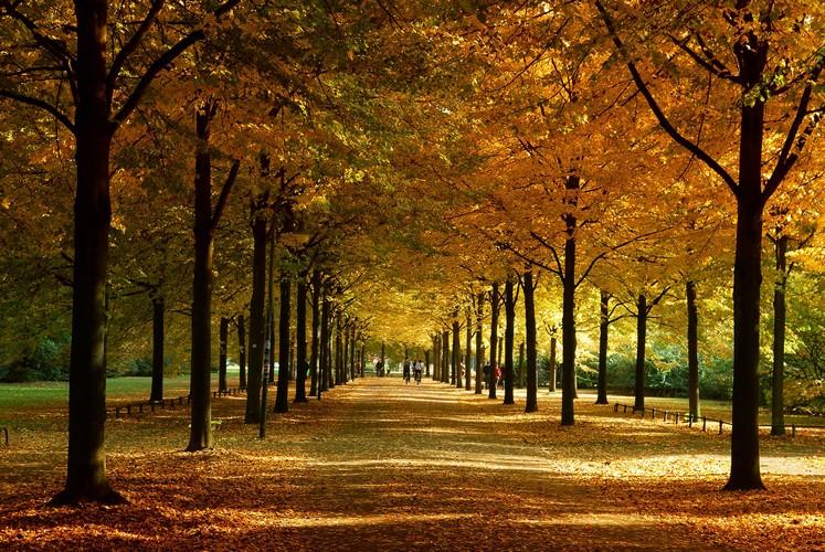 Münster Promenade