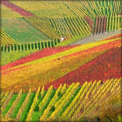 House nestled in Vineyard - Fall Nature, Germany (Batikart ... handicapped ... sorry for no comments) Tags: autumn red orange house plant flower green rot fall nature leaves yellow canon germany square landscape geotagged deutschland leaf vineyard interestingness vines europa europe colours seasons wine earth herbst natur pflanze stripe haus foliage explore gelb vineyards greenery colourful grn patchwork 2008 landschaft bltter 500faves breathtaking indiansummer wein farben weinberg streifen a610 badenwrttemberg swabian naturesfinest beutelsbach canonpowershota610 10000views herbstfrbung 100faves i500 200faves 25000views viewonblack outstandingshotshighlight 300faves regionstuttgart holidaysvacanzeurlaub 400faves 600faves batikart remsmurrkreis 900faves 700faves 800faves