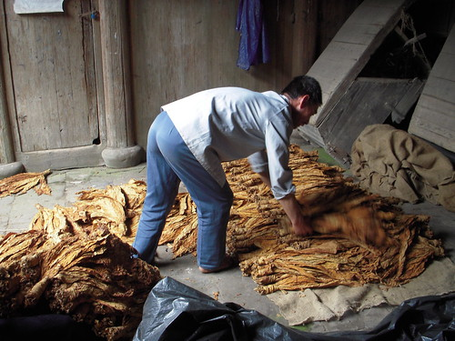 Classifying the tobacco - My daddy