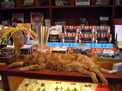 cat sleeping at a souvenir shop