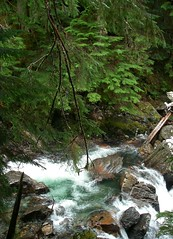 Wild Elliot Creek