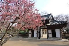 Suwon - Coree du Sud (TheFunnyBird) Tags: du coree sud suwon