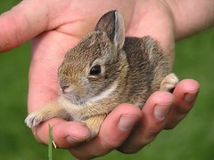 John rescues bunny