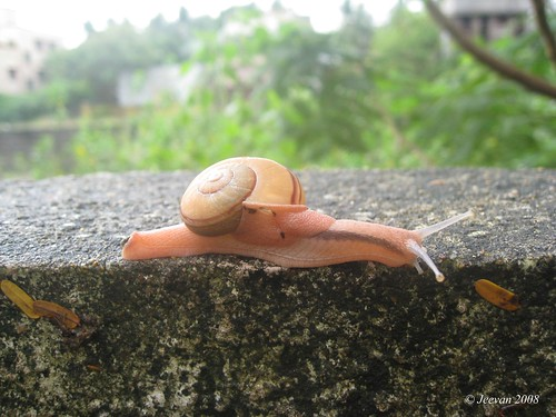 My Snail