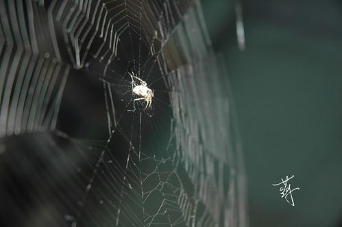 蜘蛛 Spider