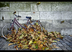 Ok... just one more bike... but this one was at Utrecht!!! :D (B'Rob) Tags: travel blue autumn streetart cold holland color building verde art tourism netherlands true leaves bike architecture hojas photography photo yahoo google nikon flickr symbol picture ciudad bicicleta tourist best explore most bici otoño 1224mm frio mejor tradición d300 brob explored brobphoto