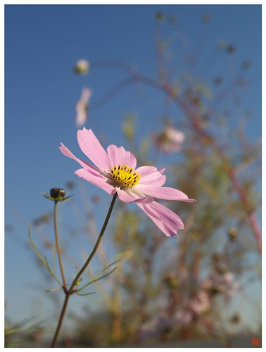 Flowers 081216 #05