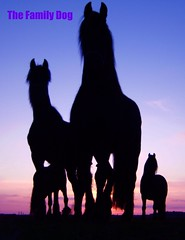 Wide open spaces and the spirits that prosper in them (The Family Dog) Tags: blue sunset sky horses horse netherlands dutch animals silhouette caballo photography ameland niederlande paarden frisian galope friese pferden friesische