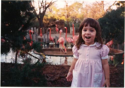 Danielle - flamingos